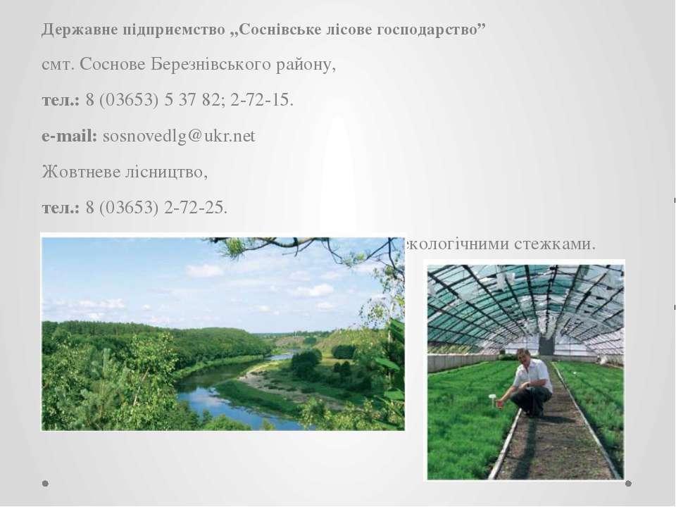 "Державне підприємство ""Соснівське лісове господарство"" смт. Соснове Березнівс..."