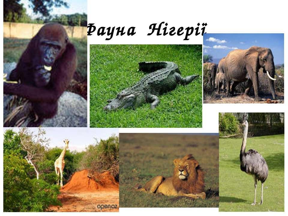 Фауна Нігерії