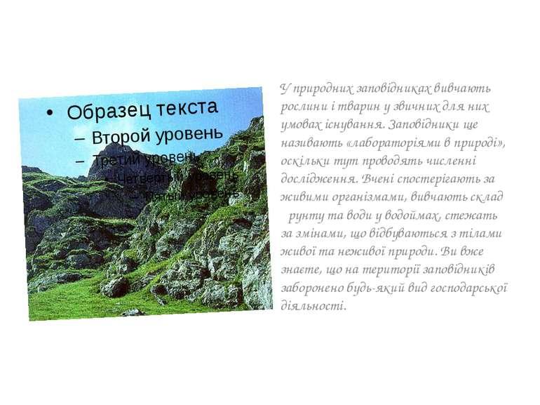 У природних заповідниках вивчають рослини і тварин у звичних для них умовах і...
