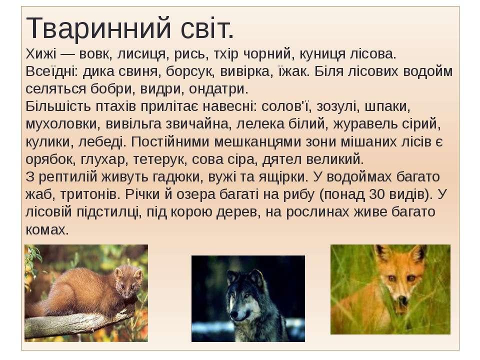 Тваринний світ. Хижі — вовк, лисиця, рись, тхір чорний, куниця лісова. Всеїдн...
