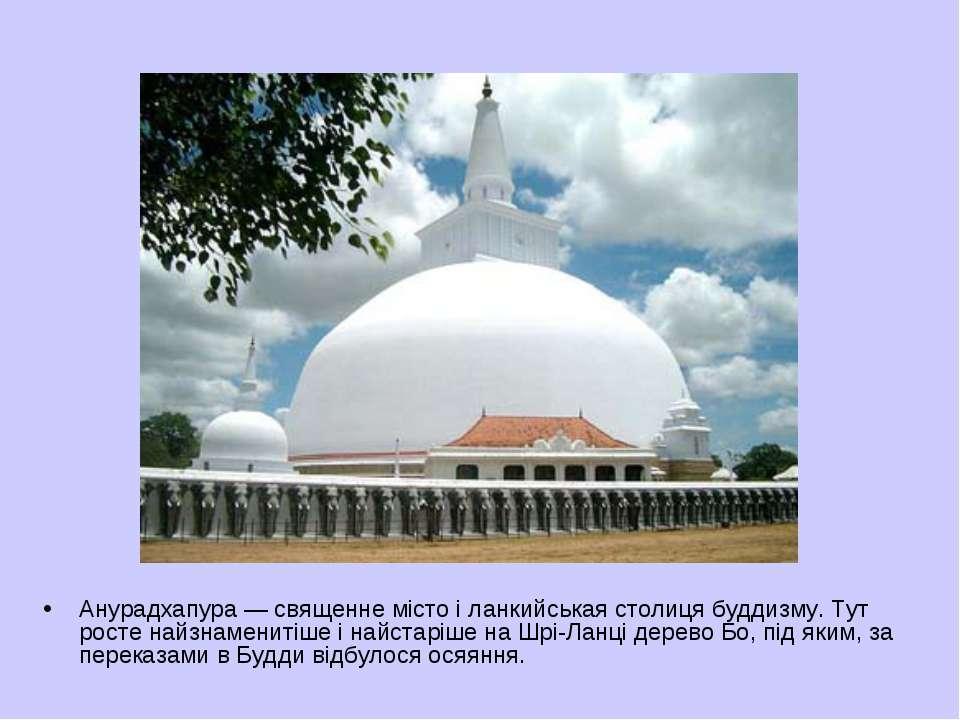Анурадхапура— священне місто і ланкийськая столиця буддизму. Тут росте найзн...