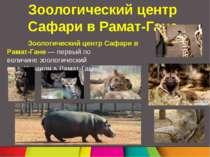 Зоологический центр Сафари в Рамат-Гане Зоологический центр Сафари в Рамат-Га...