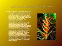 Туристична характеристика культурних традицій народів В наші дні Ямайка, а ос...