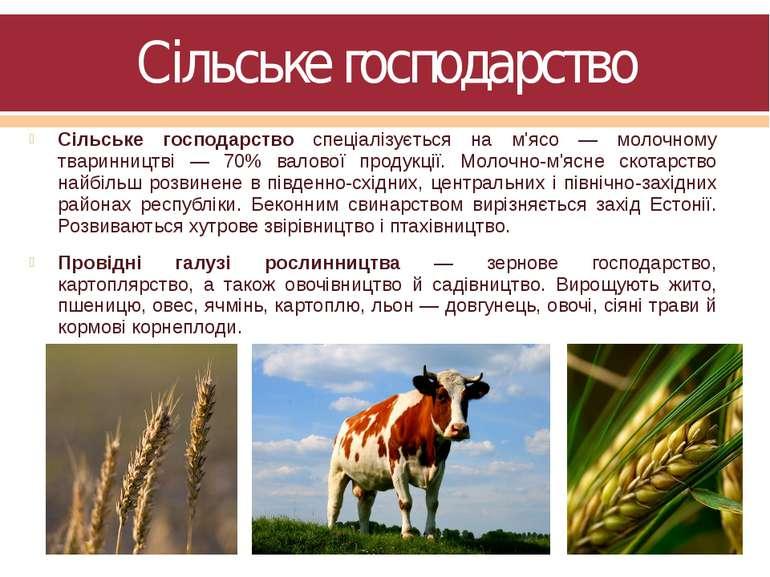Сільське господарство Сільське господарство спеціалізується на м'ясо — молочн...