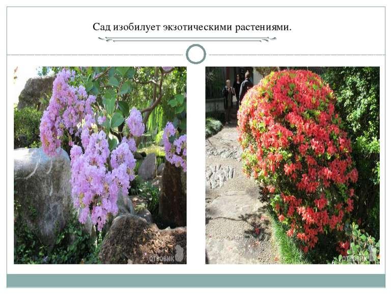 Сад изобилует экзотическими растениями.