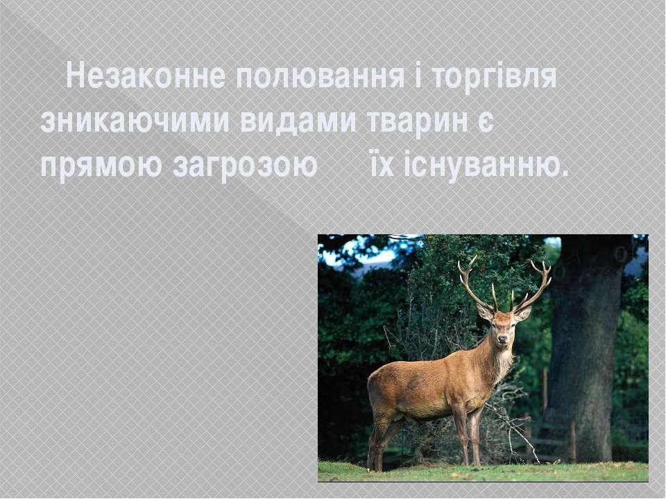Незаконне полювання і торгівля зникаючими видами тварин є прямою загрозою їх ...