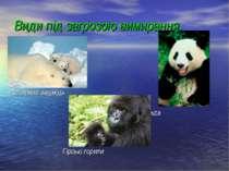 Види під загрозою вимирання. Полярний ведмідь Велика Панда Гірські горили
