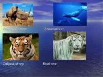 Яванський носоріг Блакитний кит Сибірський тигр Білий тигр