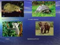 Новозеланська совина папуга Слонова черепаха Коала Африканський слон
