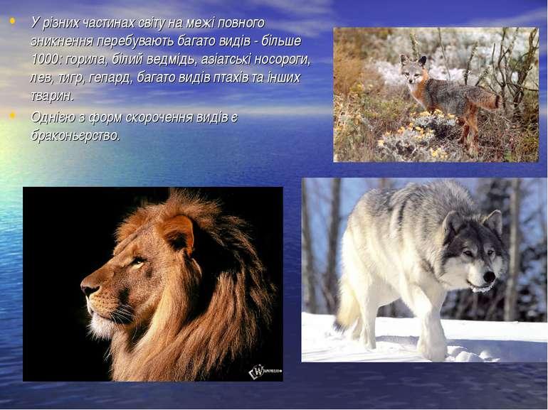 У різних частинах світу на межі повного зникнення перебувають багато видів - ...