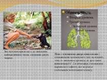 Знеліснення призводить до знищення найважливіших місць існування диких тварин...