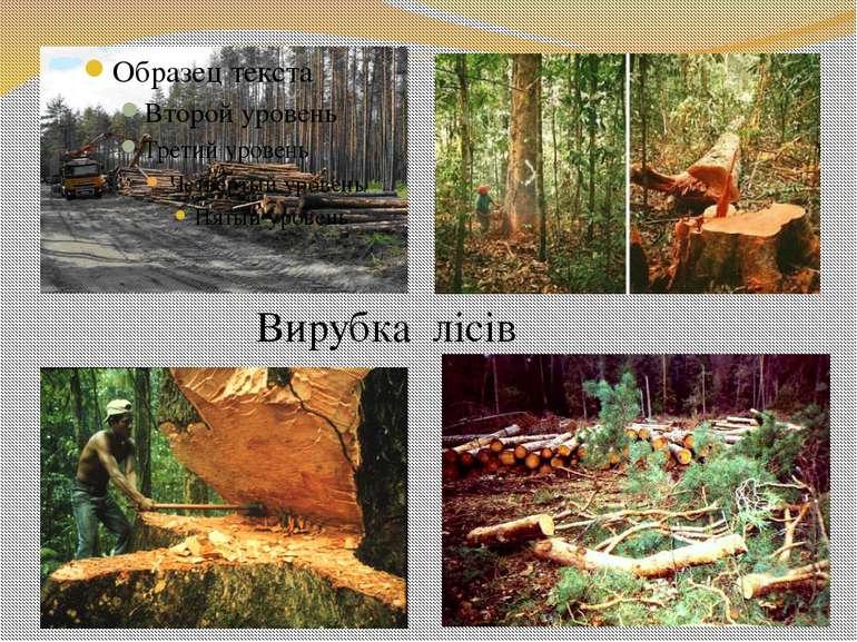 Вирубка лісів