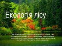 Ліс - природне єдність, складовою частиною якого є і оточення. Тому відділенн...
