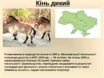 Кінь дикий Розмноження в природі почалося в 1998 р. Максимальної чисельності ...