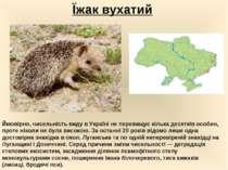 Їжак вухатий Ймовірно, чисельність виду в Україні не перевищує кілька десяткі...