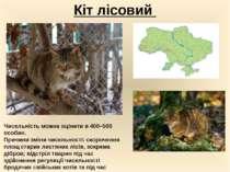 Кіт лісовий Чисельність можна оцінити в 400–500 особин. Причини змiни чисель...