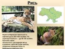 Рись Наразі в Карпатах чисельність оцінюється в 350–400 особин. На території ...