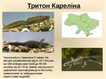 Тритон Кареліна Чисельність і причини її зміни:На місцях розмноження від 5–1...