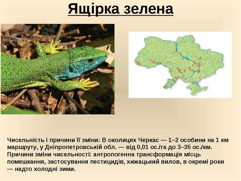 Ящірка зелена Чисельність і причини її зміни:В околицях Черкас — 1–2 особини...