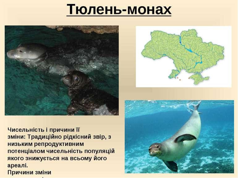 Тюлень-монах Чисельність і причини її зміни:Традиційно рідкісний звір, з низ...