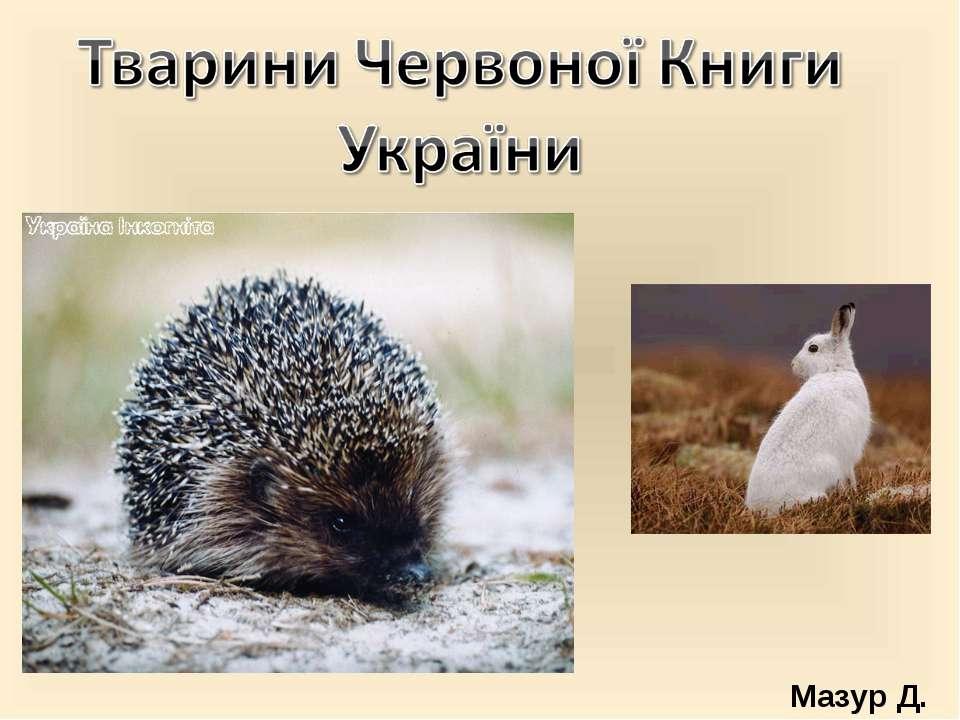 Мазур Д.