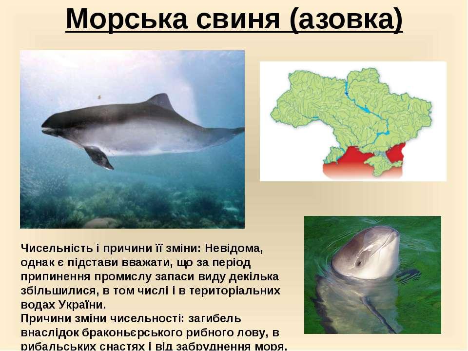 Морська свиня (азовка) Чисельність і причини її зміни:Невідома, однак є підс...