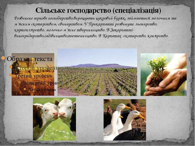 Сільське господарство (спеціалізація) Розвинене зернове господарство,вирощуют...