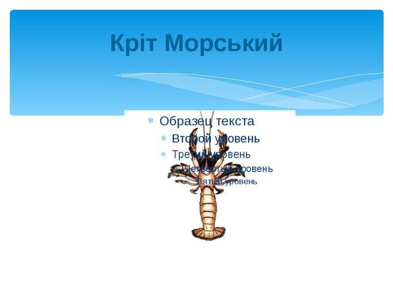 Кріт Морський