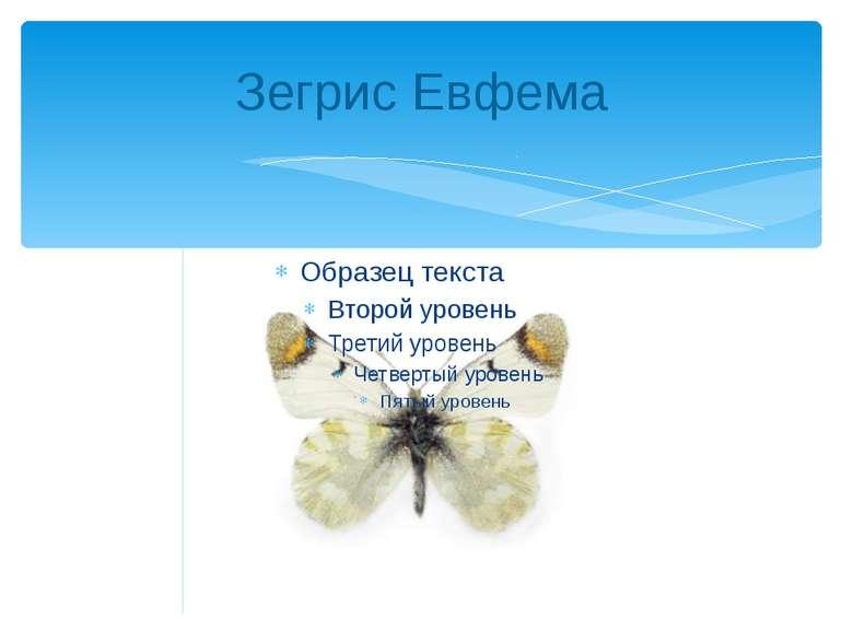 Зегрис Евфема