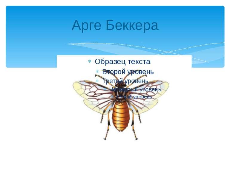 Арге Беккера