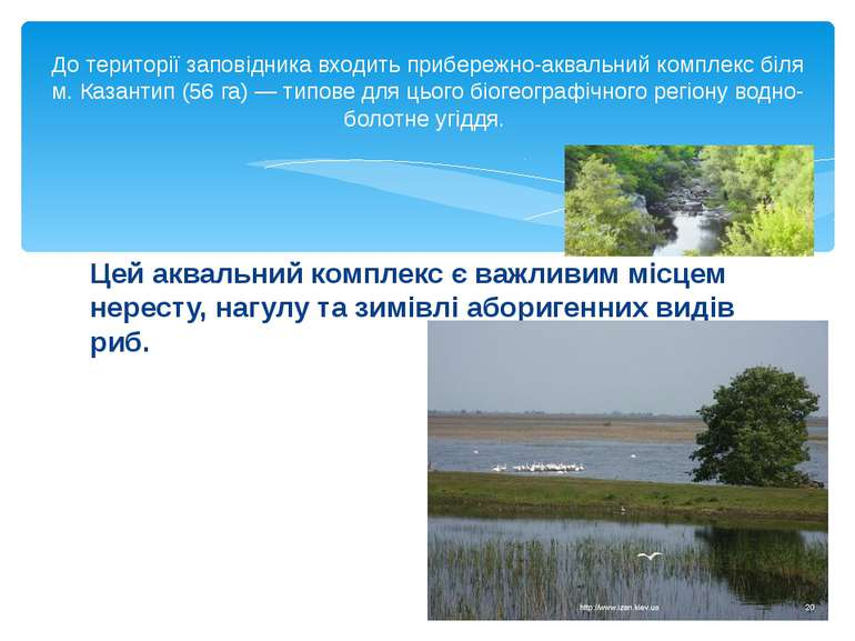 Цей аквальний комплекс є важливим місцем нересту, нагулу та зимівлі аборигенн...