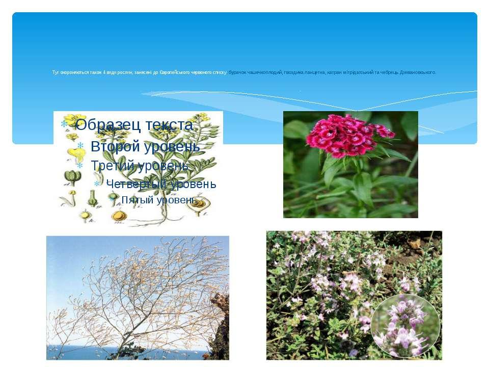 Тут охороняються також 4 види рослин, занесені до Європейського червоного спи...