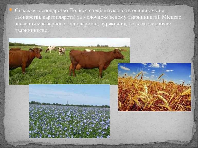 Сільське господарство Полісся спеціалізуються в основному на льонарстві, карт...