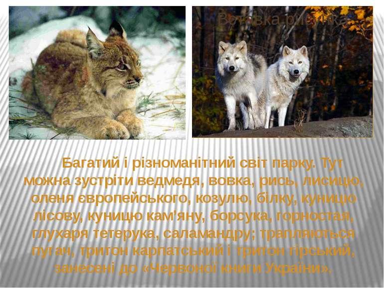 Багатий і різноманітний світ парку. Тут можна зустріти ведмедя, вовка, рись, ...