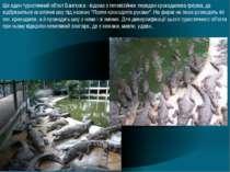 Ще один туристичний об'єкт Бангкока - відома з телевізійних передач крокодило...