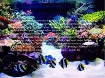 Коралові острови Коралові острови утворюються в результаті скупчення вапняков...