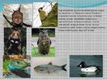Характерними представниками фауни парку, що включені до Червоної книги Україн...