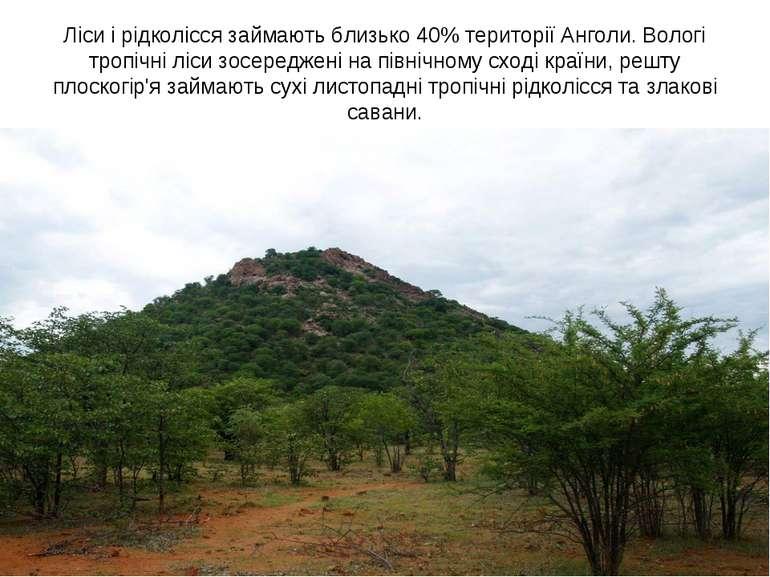 Ліси і рідколісся займають близько 40% території Анголи. Вологі тропічні ліси...