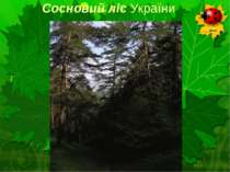 Сосновий ліс України
