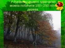 У буковому пралісі одночасно можна побачити 100 і 250-літні дерева