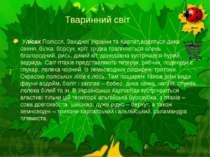 Тваринний світ УлісахПолісся, Західної України та Карпат,водяться дика свин...