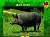 Дика свиня