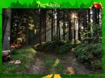 Ліс Чехії