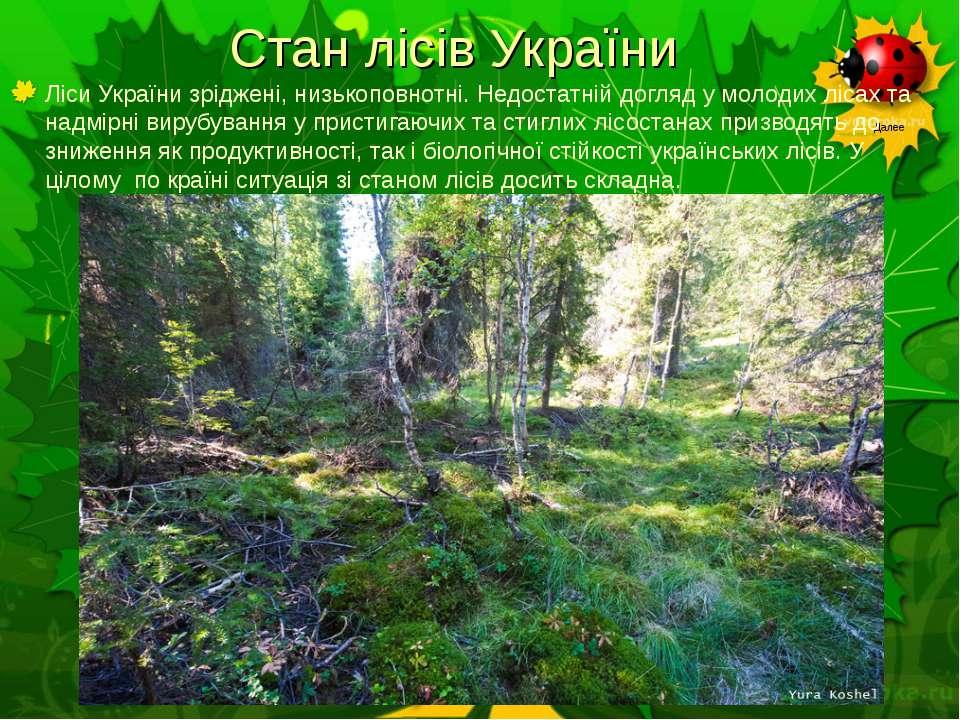 Стан лісів України Ліси України зріджені, низькоповнотні. Недостатній догляд ...