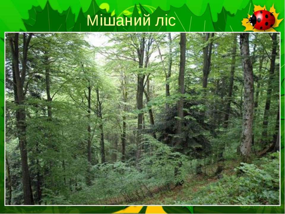 Мішаний ліс
