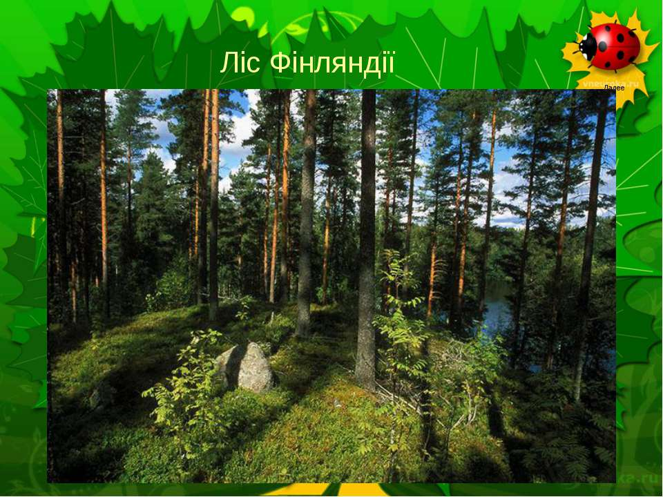 Ліс Фінляндії