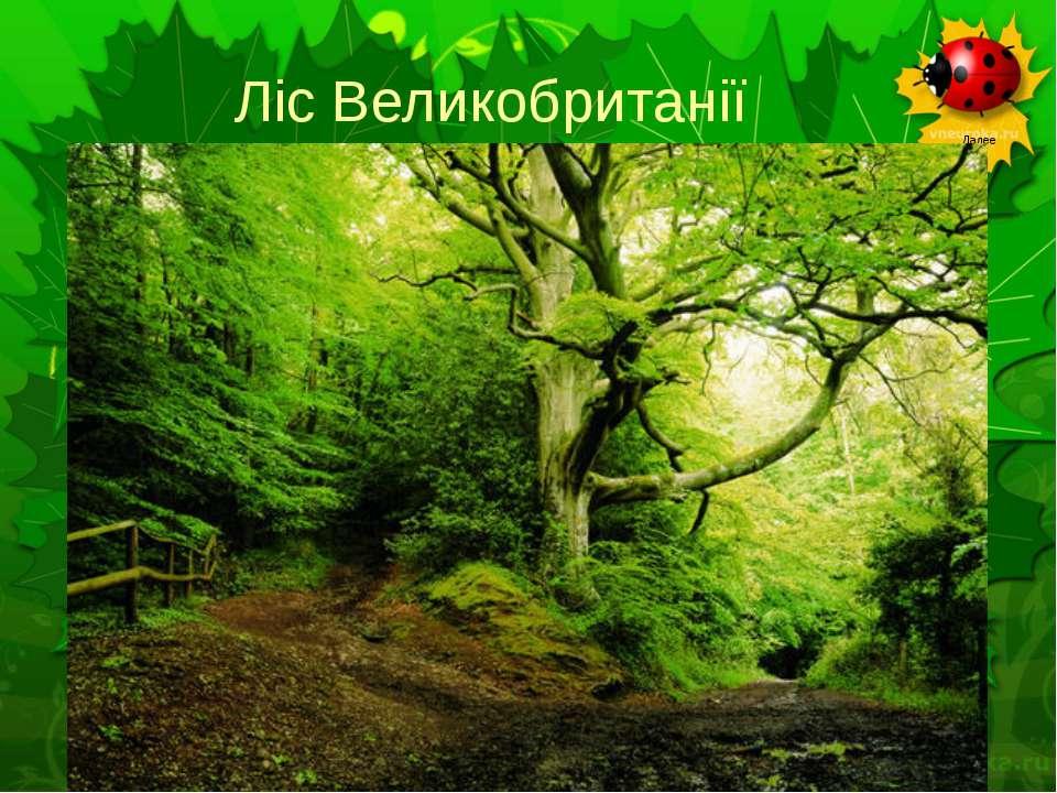 Ліс Великобританії
