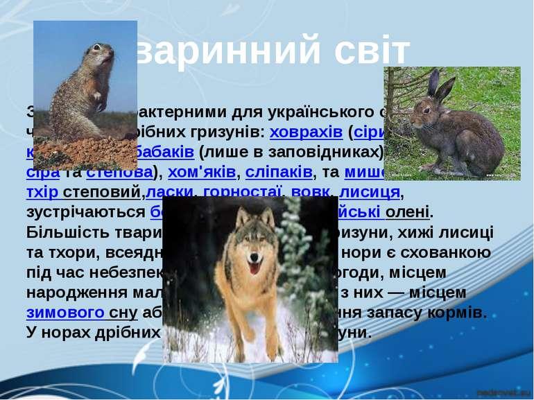 Зссавцівхарактерними для українського степу, крім численних дрібних гризуні...