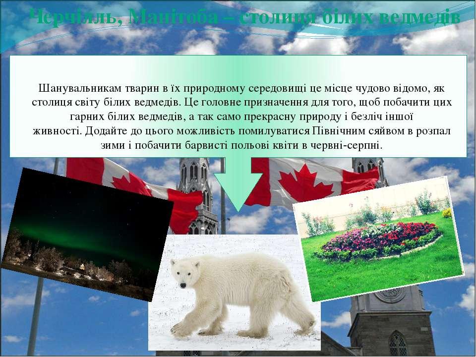 Черчілль, Манітоба – столиця білих ведмедів Шанувальникам тварин в їх природн...
