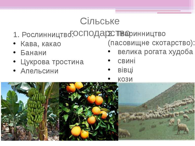 1. Рослинництво: Кава, какао Банани Цукрова тростина Апельсини Сільське госпо...